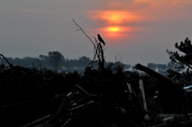 Sun rises on devastation one month after earthquake, tsunami struck Japan