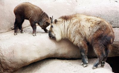 NEW ANIMALS AT ZOO