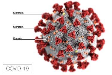 Microscopic Illustration of Coronavirus Disease 2019 (COVID-19)