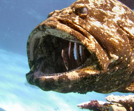 Viral video shows grouper swallow shark off fisherman's reel in one terrifying gulp