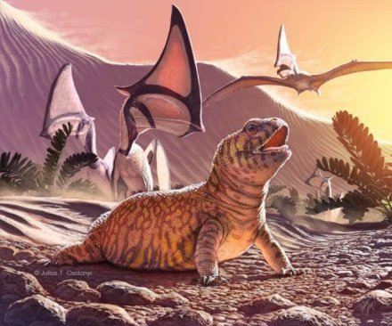 Ancient iguana fossil shines light on lizard evolution