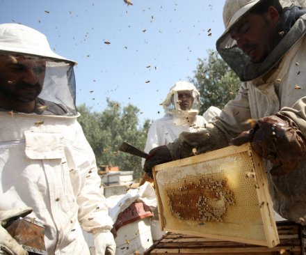 Study: China losing fewer honey bees than United States