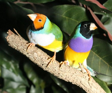 Colorful bird plumage is about survival, not just sex