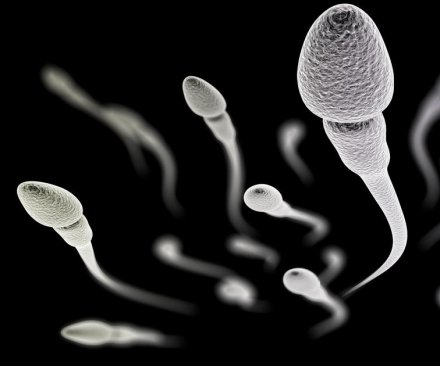 Potential male contraceptive found in study with mice