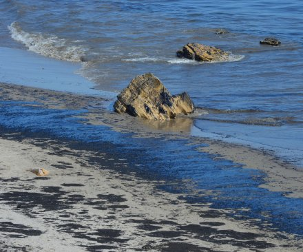 Animals dead as a result of California oil spill