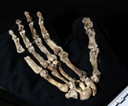bones of early relative found in so. Africa