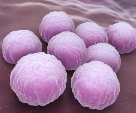 Immune system protein may help fight chlamydia