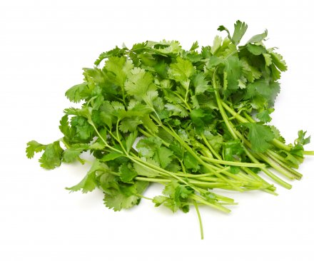 Feces-contaminated cilantro could be linked to up to 384 cases of cyclosporiasis