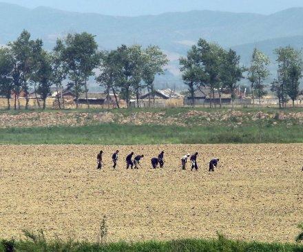 N. Korean children starving
