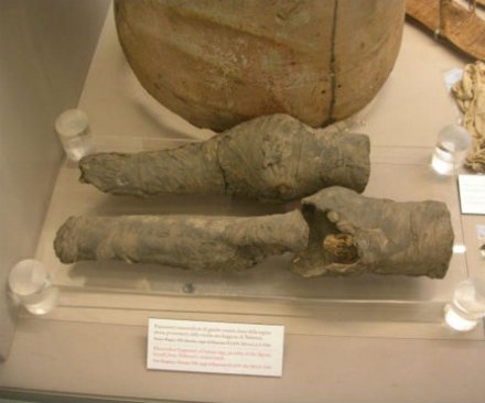 Pair of mummified legs may belong to Egyptian Queen Nefertari