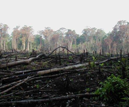 Major palm oil companies to halt deforestation
