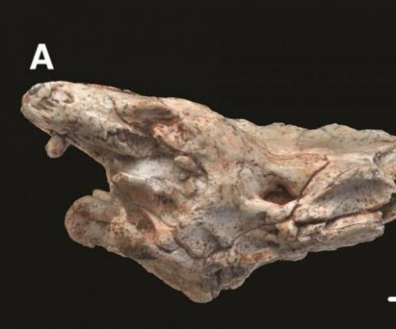 Fossil scan reveals how snakes became limbless