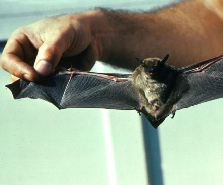 Endangered bats find sanctuary in Vermont power plant