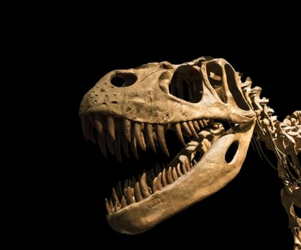 How much do we really know about dinosaurs?