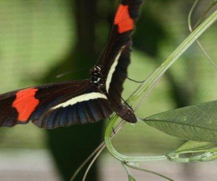 Butterflies tell plants apart by leaf shape