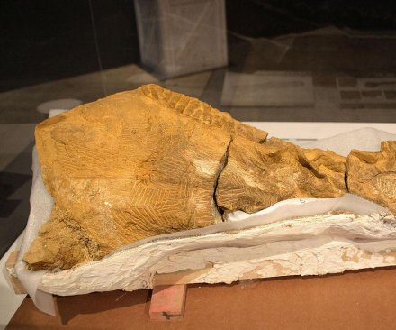North Dakota forks over $3 million for mummified dinosaur