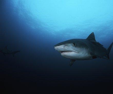 Shark bite confirmed off North Carolina shore