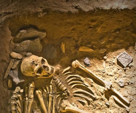 Study: Homo genus origins not dictated by body size increase