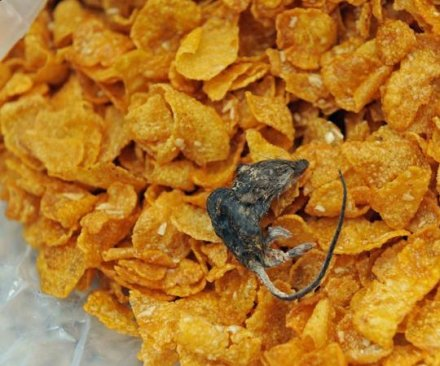 British grandma finds dead mouse in unopened package of Kellogg's Cornflakes