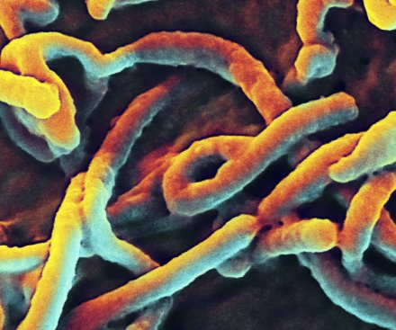 Sierra Leone Ebola outbreak traced to single incident