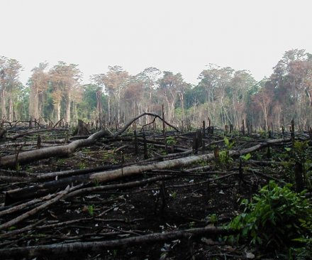 Major palm oil companies to halt deforestation