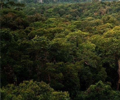 Deforestation in the Amazon has increased 190 percent, satellites show