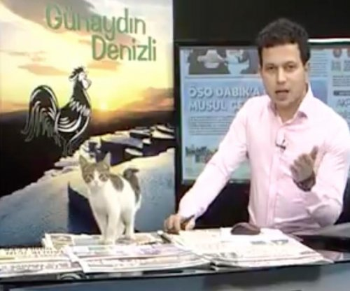 Stray kitten interrupts Turkish news broadcast