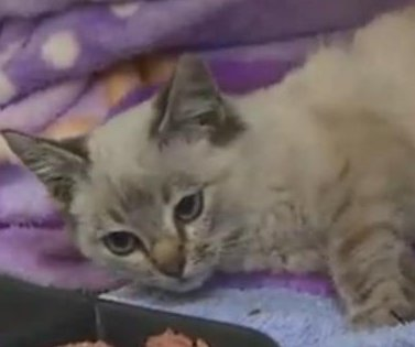 Happy ending for kitten shrink-wrapped to box and shipped 500 miles