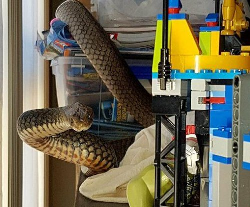 Deadly snake found wrapped around child's Lego set