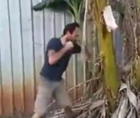 Australian man fells tree with barrage of bare-knuckle punches