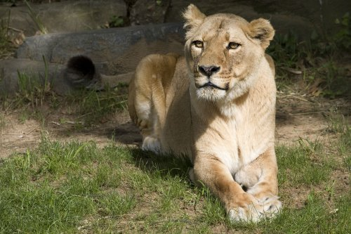 Widow wants Ohio to return exotic animals