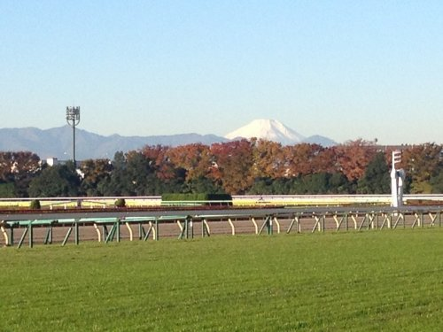Japan Cup tops weekend racing agenda