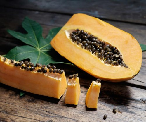 Cocaine hidden in papaya import from Dominican Republic leads to arrests in Spain