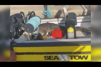 Curious crocodile boards boat docked in Florida