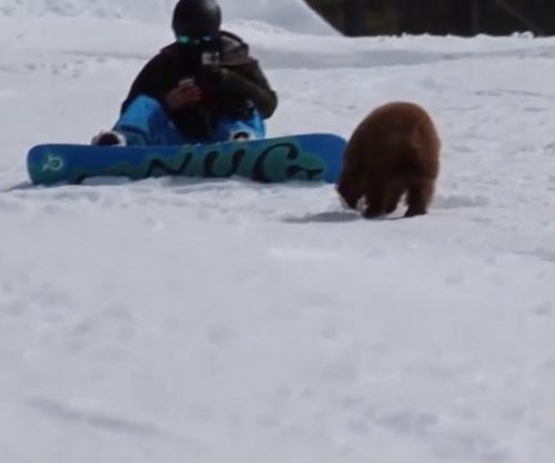 Bear cub approaches snowboarders in California