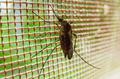 Drug compounds prevent mosquitoes' malaria infection