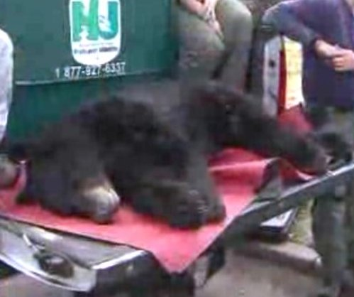 Black bear captured in New Jersey neighborhood