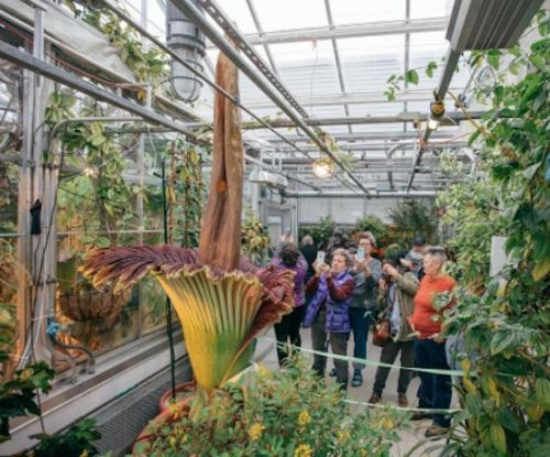 Foul-smelling, rare 'corpse flower' blooms at Dartmouth College