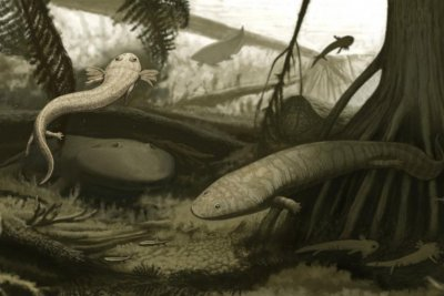 Researchers discover ancient eel with fangs in Brazil