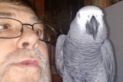 California bird rescue dealing with potty-mouthed parrot