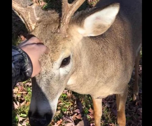Wisconsin hunter spares friendly deer after catching encounter on video