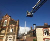 Animal rescuers, firefighters come to assistance of cat stranded on roof