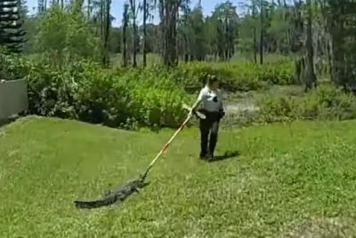 Watch: Alligator napping under parked car takes broom 'joy ride' back to pond thumbnail