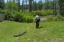 Alligator napping under parked car takes broom 'joy ride' back to pond