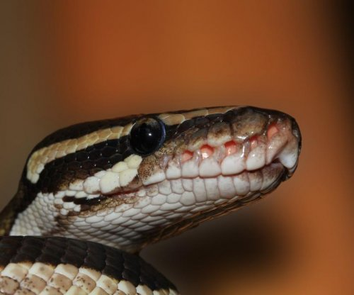 Missing Toronto python found in owner's basement four months later
