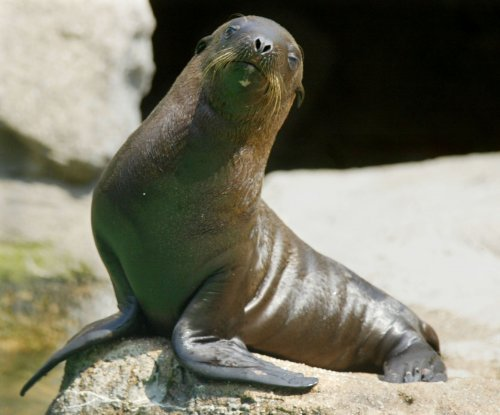 500 sea lions found dead on beach in Peru