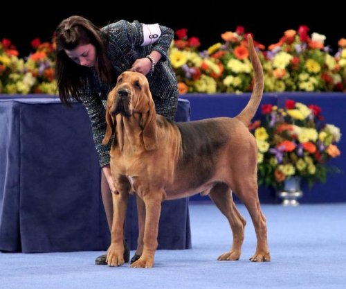 Nathan the Bloodhound wins the National Dog Show in Philly