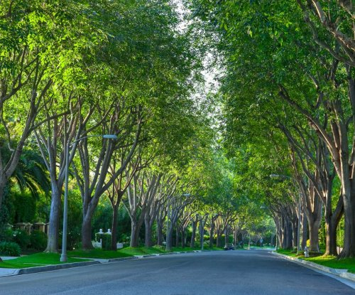 California's urban trees offer $1 billion in benefits