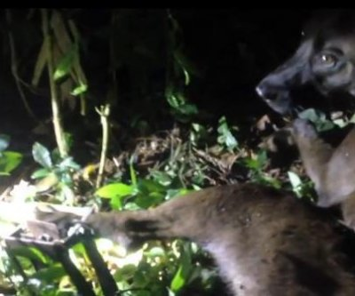VIDEO: Dog rescued from leg-crushing trap in national park