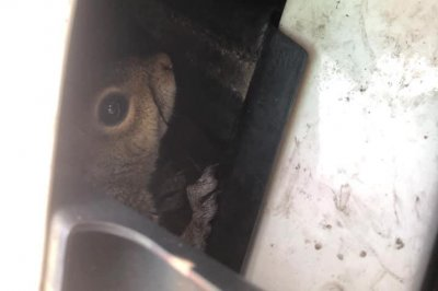 Squirrel rescued from under hood of Virginia State Police car